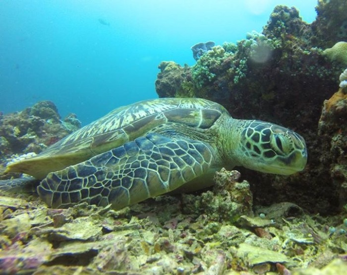 Scuba Diving, Turtles, Turtle Talk, Gili T, Meno Wall, Contiki, Bali Island Hopper